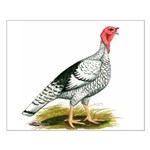 Royal Palm Hen Turkey Small Poster