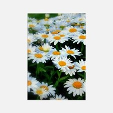 Field of Daisies Rectangle Magnet