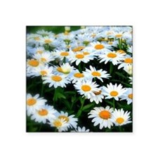 "Field of Daisies Square Sticker 3"" x 3"""