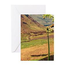 Scottish Highlands 1 Greeting Cards