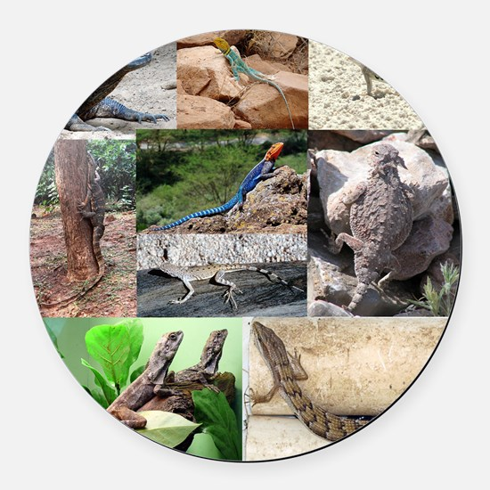 Lizard Types full Color Round Car Magnet