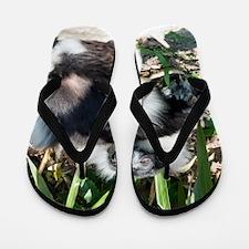Lazy Lemur Flip Flops