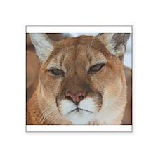 "Big Faced Cougar Square Sticker 3"" x 3"""