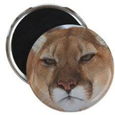 Big Faced Cougar Magnet