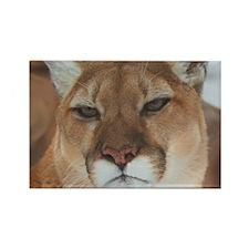 Big Faced Cougar Rectangle Magnet