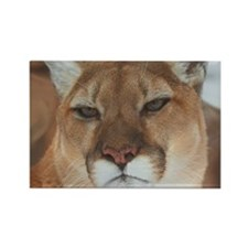 Big Faced Cougar Rectangle Magnet (100 pack)