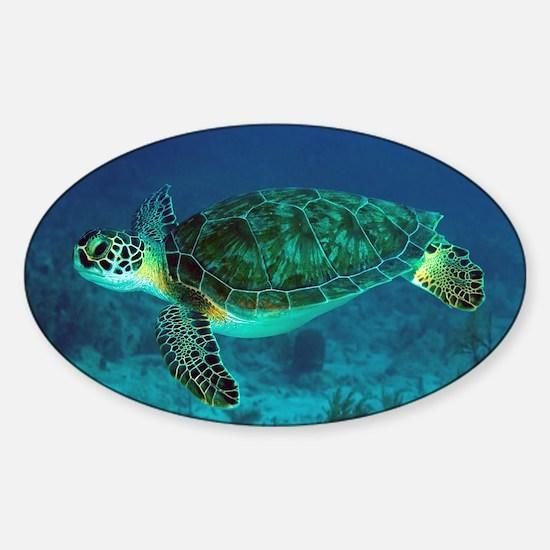 Ocean Turtle Bumper Stickers