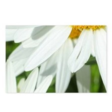 Summer daisies Postcards (Package of 8)