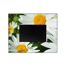 Summer daisies Picture Frame