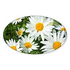 Summer daisies Decal