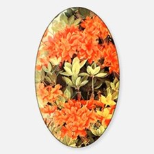 Flame Azalea Sticker (Oval)