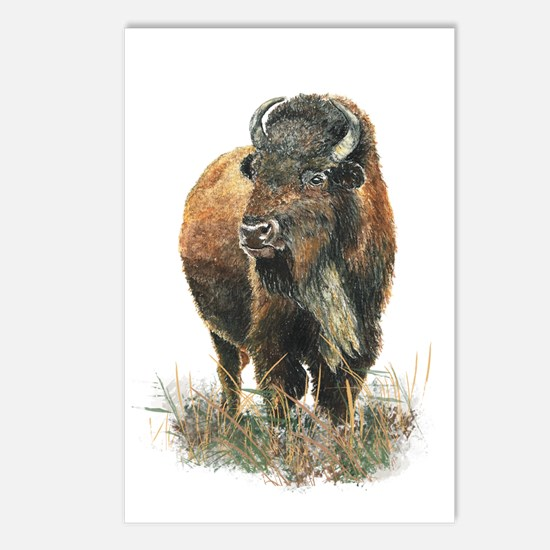 Watercolor Buffalo Bison Postcards (package Of 8)