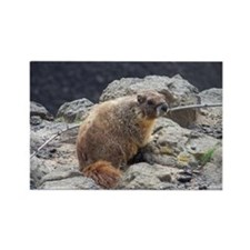 Marmot Rectangle Magnet