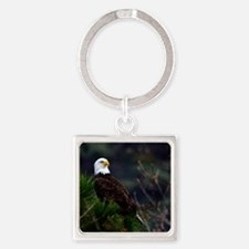 Bald Eagle in Pines Keychains