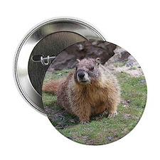 """Marmot 2.25"""" Button"""