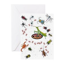 Unique Insect Greeting Cards (Pk of 10)