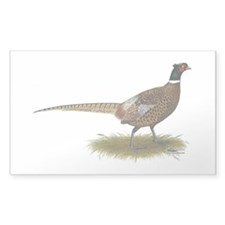 Ringneck Pheasant Afield Decal