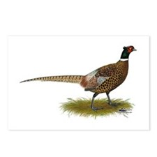 Ringneck Pheasant Afield Postcards (Package of 8)