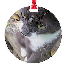 grey autumn cat Ornament