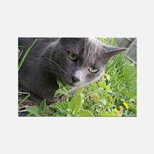 Garden Cat Rectangle Magnet