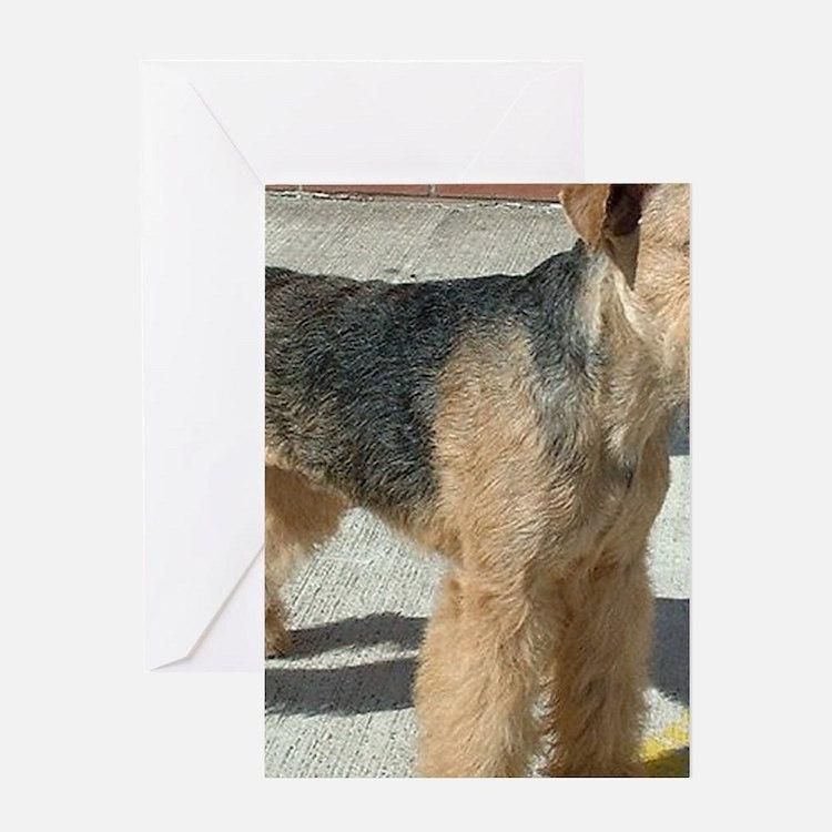 lakeland terrier full Greeting Cards