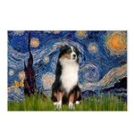 Starry - Tri Aussie Shep2 Postcards (Package of 8)