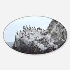 Birds on a Poopy Rock  Decal