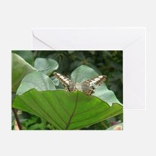 Butterfly on a Plant Greeting Card