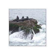 """Sea lions Square Sticker 3"""" x 3"""""""