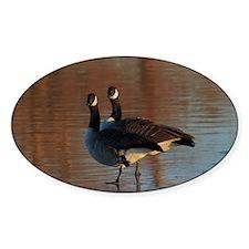 Canadian Goose Portrait's Decal