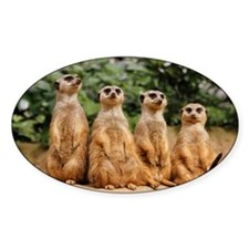Meerkat-Quartett 001 Decal