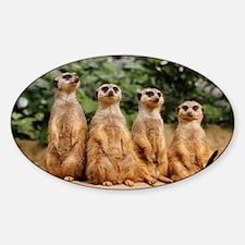 Meerkat-Quartett 001 Sticker (Oval)