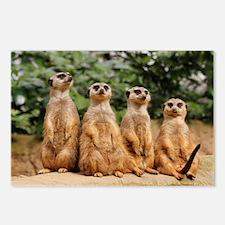 Meerkat-Quartett 001 Postcards (Package of 8)