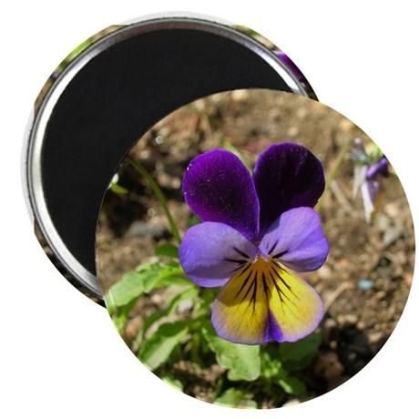 Pansy Magnets