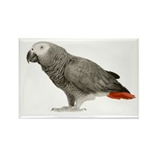 African Grey Rectangle Magnet