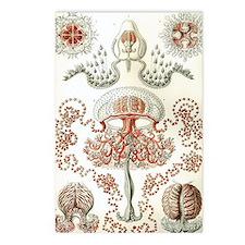 Haeckel Anthomedusae Postcards (Package of 8)