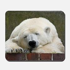 Polar bear 003 Mousepad