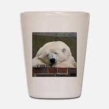 Polar bear 003 Shot Glass
