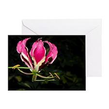 Gloriosa Lily (Gloriosa superba) flo Greeting Card