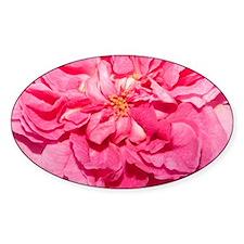 Pink Rose Gertrude Jekyll  Decal