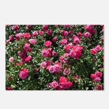Rose bush with flowers  Postcards (Package of 8)