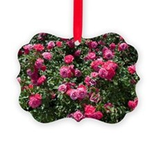 Rose bush with flowers  Ornament
