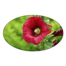 Bright Red Holly Hock close up Decal