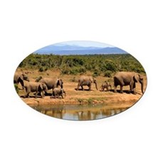 Wild Elephant Oval Car Magnet