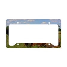 Kansas Country Hereford Cows  License Plate Holder