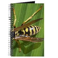 Yellow Jacket Journal