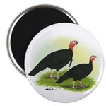 Black Turkeys Magnet