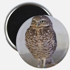 Burrowing owl Magnets