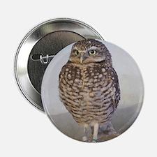 "Burrowing owl 2.25"" Button"