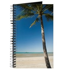lone palm tree Journal